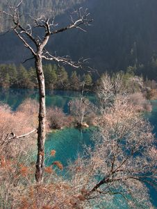 Free Dead Tree & Blue Lake Stock Photo - 3640970