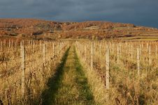 Free Vineyard After Harvest Royalty Free Stock Photos - 3641918