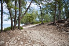 Free Tree Lined Beach Path Stock Images - 3644294