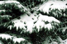 Free Snowbound Branch Stock Photo - 3644490