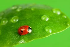 Free Ladybird Royalty Free Stock Photo - 3644895