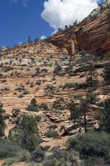 Free Zion National Park Royalty Free Stock Photo - 3645125