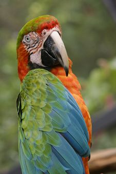 Free Exotic Parrot - Macaw Stock Photo - 3645830