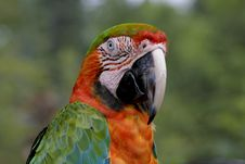 Free Exotic Parrot - Macaw Stock Images - 3645854