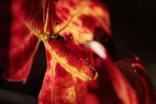Free Colors Of Autumn Grapevine Stock Photography - 3647442