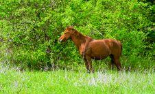 Free Stallion On A Woodside Stock Photos - 3647483
