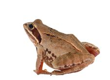 Free Frog Move Stock Photos - 3647983