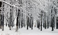 Free First Snow In A Park Royalty Free Stock Image - 3648436