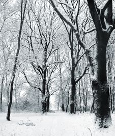 Free Cover Of Snow In A Park Royalty Free Stock Photos - 3648448
