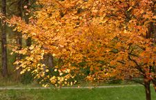 Free Yellow Leaves On A Tree Stock Image - 3648471