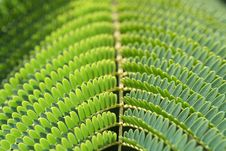 Free Fern Royalty Free Stock Photo - 3649465