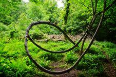 Free Loop De Loop Royalty Free Stock Images - 36403939