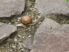 Free Snail Royalty Free Stock Photography - 36409607