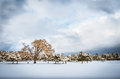 Free Trees In The Snow - Dramatic Winter Landscape Royalty Free Stock Images - 36418609