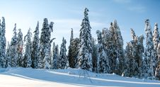 Free Real Russian Winter Royalty Free Stock Image - 36417366