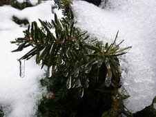 Winter Branch Royalty Free Stock Photos