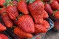 Free Strawberries Stock Photo - 36435160