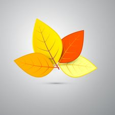 Free Orange Autumn Leaves Isolated On Grey Background Royalty Free Stock Photo - 36431785
