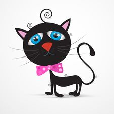 Free Black Cat, Kitten With Blue Eyes And  Pink Bow Tie Stock Photo - 36431890