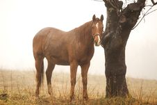 Free Horse In The Fog Royalty Free Stock Image - 36432816