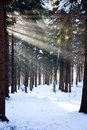 Free Sunlight In Winter Stock Photo - 36448250