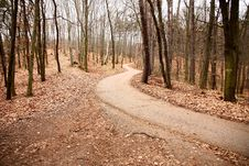Free Road In Forest Stock Photos - 36442263