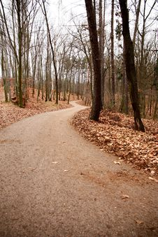 Free Path In The Woods Stock Photo - 36442270