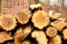 Free Cut Wood Royalty Free Stock Photo - 36442575