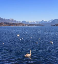 Lake Lucerne Stock Images