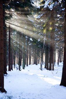 Sunlight In Winter Stock Photo