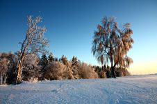Free Trees In Winter Royalty Free Stock Photo - 36464095