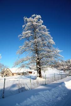 Free Snowy Tree Stock Image - 36471391