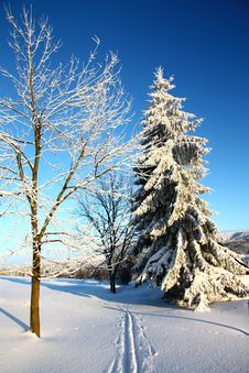 Free Snowy Spruce Stock Images - 36471644
