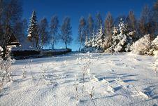 Free Snowy Garden Royalty Free Stock Photos - 36472088