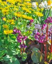 Free Colorful Flowers Royalty Free Stock Image - 36495706