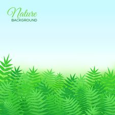 Free Natural Background With Grass Royalty Free Stock Photo - 36494765