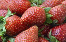 Free Strawberries Royalty Free Stock Photo - 36495655