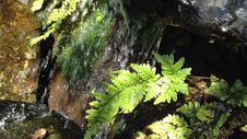 Free Small Park Waterfall With Fern Royalty Free Stock Images - 36498299