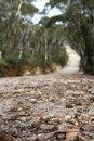 Free Isolated Bush Track Stock Photography - 3654502
