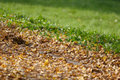 Free Autumn Leaves Contrasting With Grass Royalty Free Stock Photography - 3655727