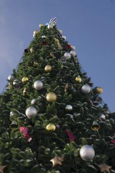 Free Christmas Tree Stock Photography - 3650062