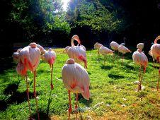 Free Flamingo Siesta Stock Images - 3650064
