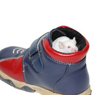 Free White Mouse In Boot Royalty Free Stock Image - 3651526
