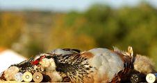 Free Two Partridges Stock Photos - 3651773
