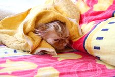 Free Wet Cat In Bed Royalty Free Stock Photography - 3654257