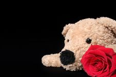 Free Bear With Rose Royalty Free Stock Photo - 3654455