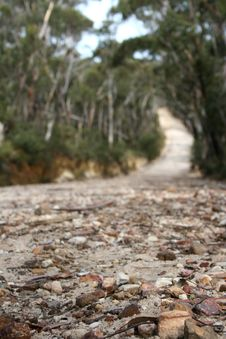 Free Isolated Bush Track Stock Photography - 3654502