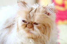 Free Cat Stock Photography - 3654612