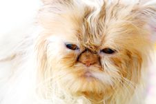 Free Cat Royalty Free Stock Photo - 3654815