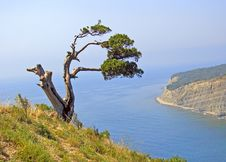 Free Tree And The Sea Royalty Free Stock Photography - 3655567